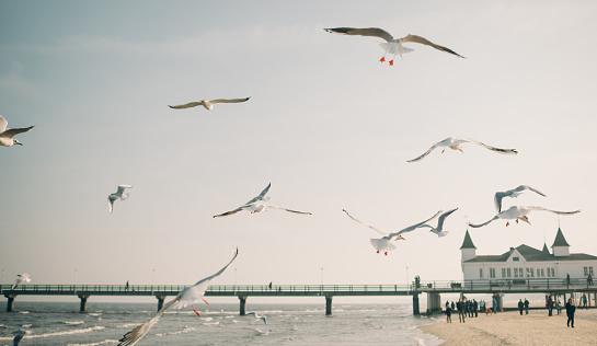Flock Of Birds「Flying Seagulls」:スマホ壁紙(8)