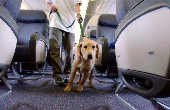 航空機「Student Guide Dogs Take Tour Of Newark Liberty Airport」:写真・画像(14)[壁紙.com]