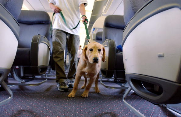 飛行機「Student Guide Dogs Take Tour Of Newark Liberty Airport」:写真・画像(7)[壁紙.com]