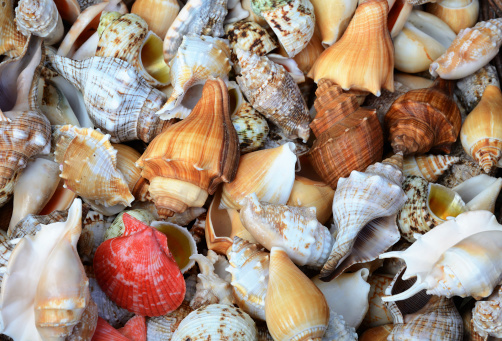 Collection「Group of different sea shells」:スマホ壁紙(8)