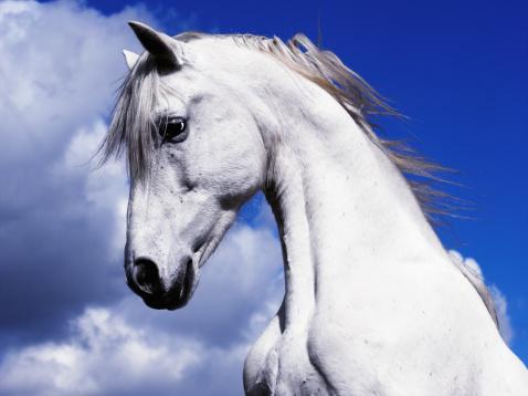 Stallion「Shadowfax White Horse On A Blue Sky Clouds」:スマホ壁紙(8)