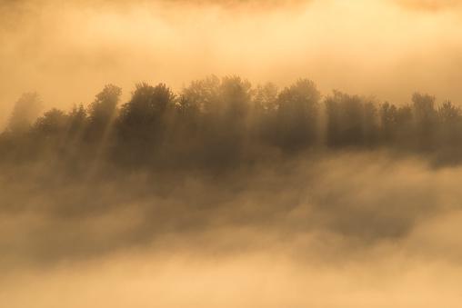 Adirondack Mountains「Trees in fog, Adirondack Mountains, New York State, USA」:スマホ壁紙(3)