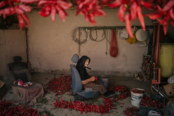 Vladimir Zivojinovic「Serbia's Red Gold: Pepper Harvest」:写真・画像(13)[壁紙.com]