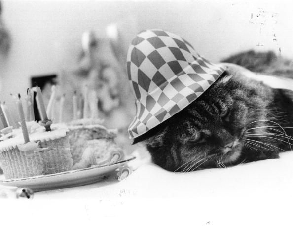 Cute「Old Cat In The Hat」:写真・画像(11)[壁紙.com]