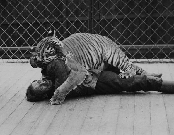 Danger「Animal Trainer」:写真・画像(10)[壁紙.com]