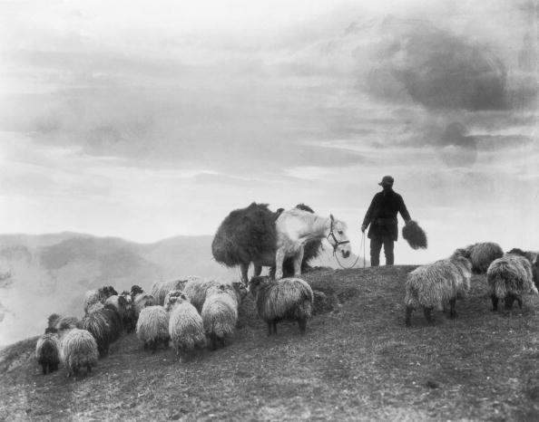 Agriculture「Sheep Farmer」:写真・画像(11)[壁紙.com]