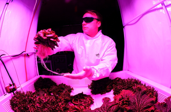 Lettuce「Scientists Hope To Grow Salad In Space」:写真・画像(1)[壁紙.com]