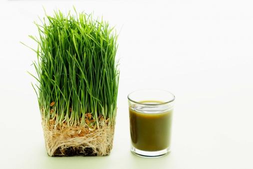 Wheatgrass Juice「Shot of wheat grass」:スマホ壁紙(8)