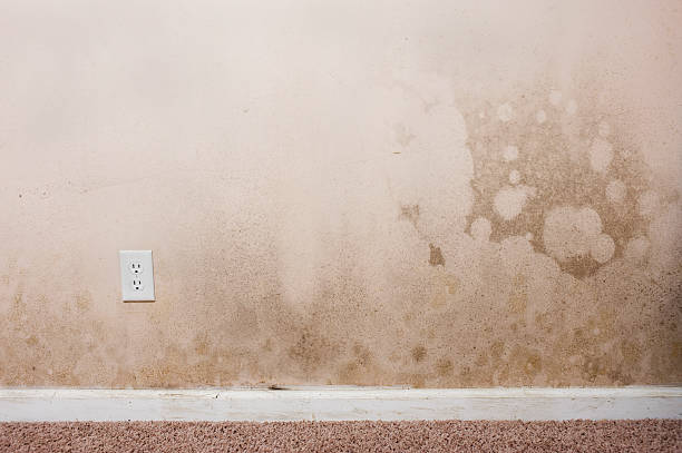 Mold on a wall in the interior of a home:スマホ壁紙(壁紙.com)