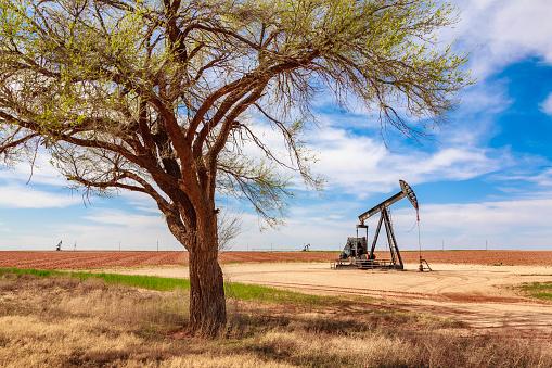 Farm「idle oil well pumpjack framed by tree, farmland, West Texas」:スマホ壁紙(15)