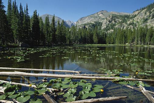 Water Lily「USA, Colorado, Rocky Mountain National Park, Nymph Lake」:スマホ壁紙(13)