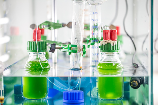 Biomass - Ecological Concept「Scientific experiment in the Laboratory with green algae」:スマホ壁紙(8)