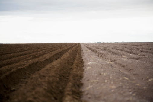 Plowed Field「Potato field, Colorado, USA」:スマホ壁紙(7)