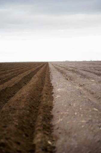 Plowed Field「Potato field, Colorado, USA」:スマホ壁紙(17)