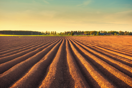 Plowed Field「Potato field at dusk」:スマホ壁紙(13)