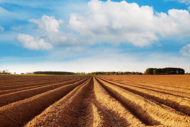 Potato field:スマホ壁紙(壁紙.com)