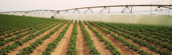 Insecticide「Potato field irrigation」:スマホ壁紙(11)