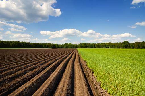 Plowed Field「Potato Field」:スマホ壁紙(4)