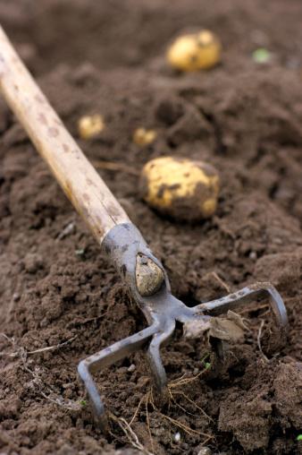 掘る「Potato field」:スマホ壁紙(19)