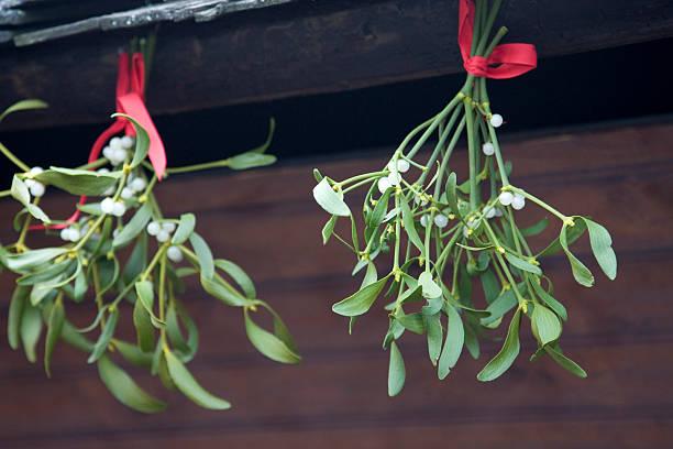 Mistletoe:スマホ壁紙(壁紙.com)