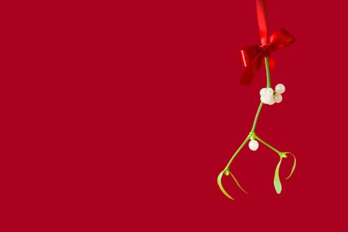 宿り木「ヤドリギ」:スマホ壁紙(17)