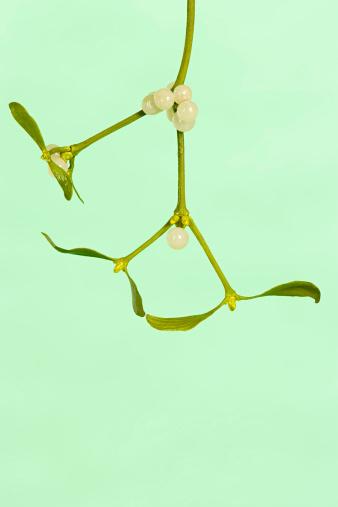 Mistletoe「Mistletoe」:スマホ壁紙(17)