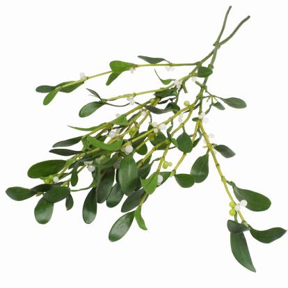 宿り木「mistletoe」:スマホ壁紙(19)