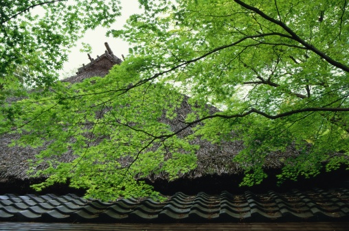 Japanese Maple「Gio-ji Temple, Kyoto Prefecture, Japan」:スマホ壁紙(1)