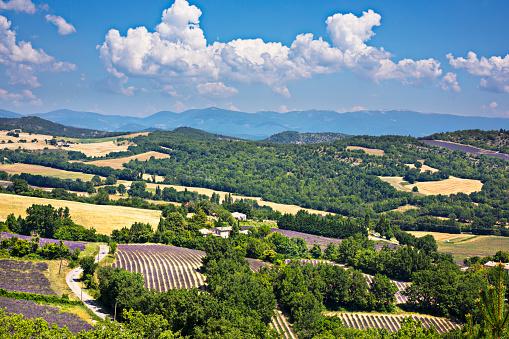 French Lavender「Provence landscape」:スマホ壁紙(11)