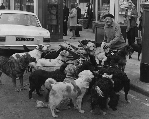 Picking Up「Dog Collection」:写真・画像(3)[壁紙.com]