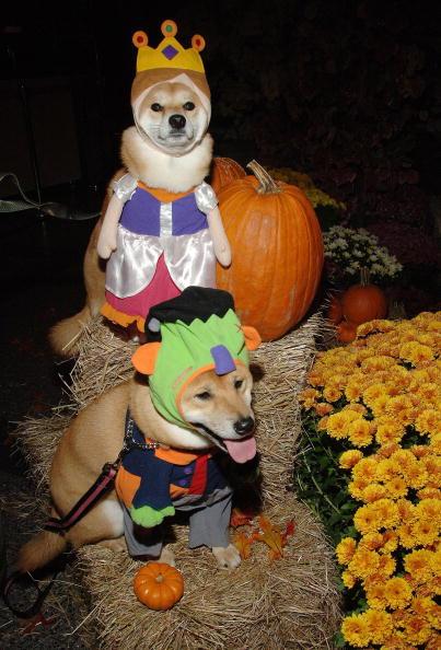 Weekend Activities「NBC's Weekend Today Anchors Dress Up For Halloween」:写真・画像(14)[壁紙.com]