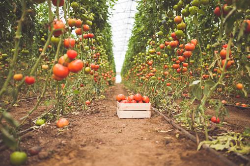 Agricultural Building「It's Organic」:スマホ壁紙(17)