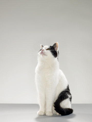 Looking Up「Black and white cat, looking up」:スマホ壁紙(10)