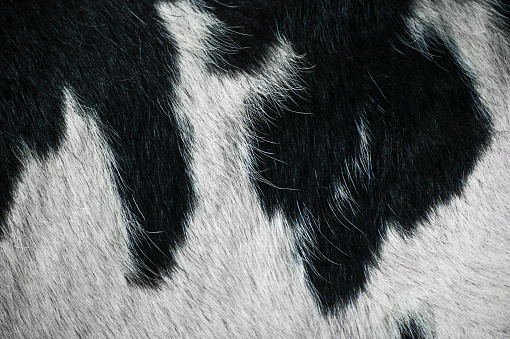 Animal Hair「Black and white cattle fur」:スマホ壁紙(3)