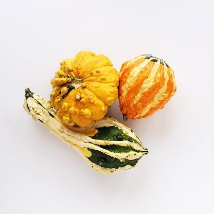 Gourd「Fall Harvest Gourds」:スマホ壁紙(15)