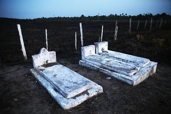 Environmental Conservation「Deforestation In Brazil's Amazon Skyrockets After Years Of Decline」:写真・画像(2)[壁紙.com]