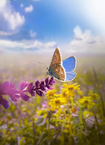マクロ撮影「美しい蝶」:スマホ壁紙(14)