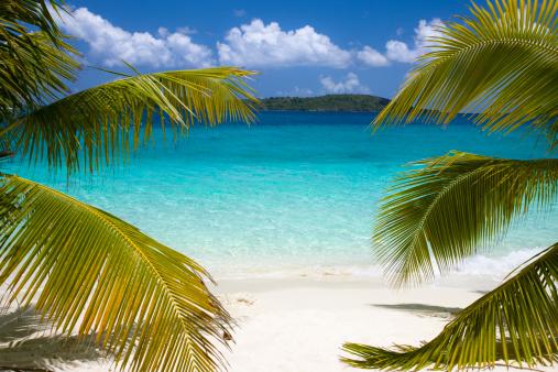 Frond「beautiful beach in the Caribbean」:スマホ壁紙(9)