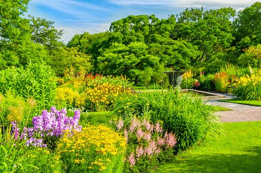花「美しい植物園のゴセンバーグ」:スマホ壁紙(19)