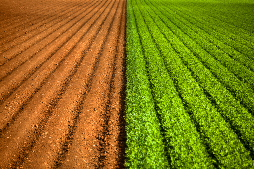 Plowed Field「Crops grow on fertile farm land」:スマホ壁紙(6)
