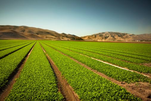 Planting「Crops grow on fertile farm land」:スマホ壁紙(13)