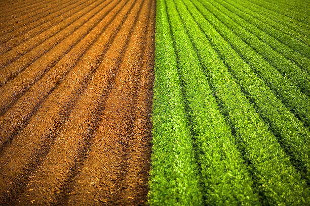 Crops grow on fertile farm land:スマホ壁紙(壁紙.com)