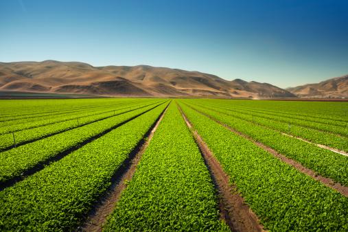 Planting「Crops grow on fertile farm land」:スマホ壁紙(11)