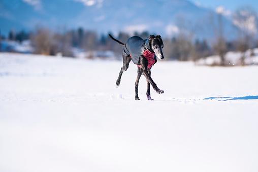 楽しみ「雪の中で遊ぶ」:スマホ壁紙(15)
