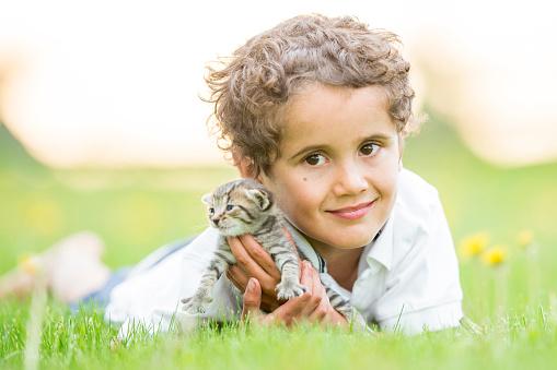 Kitten「遊ぶの芝生」:スマホ壁紙(4)
