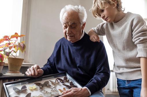 雪「Grandfather showing butterfly collection to grandson at home」:スマホ壁紙(15)