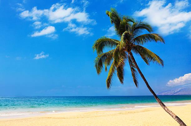 Palm on the beach:スマホ壁紙(壁紙.com)