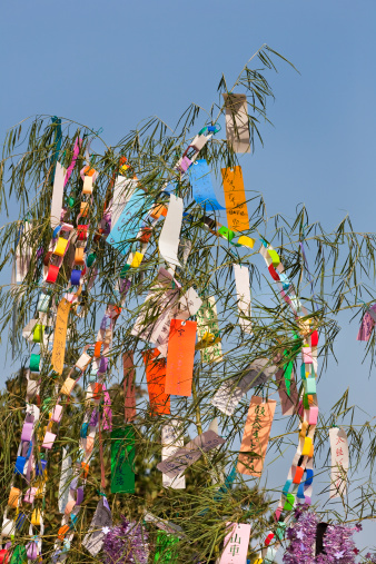 七夕「Wishes written on paper placed in tree」:スマホ壁紙(12)
