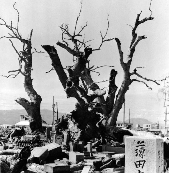 Atom「Sacred Trees At Temple In Hiroshima, Japan. 」:写真・画像(10)[壁紙.com]