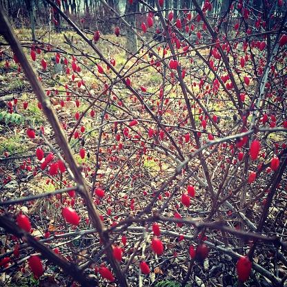 スクエア「Autumn berries on forest bush」:スマホ壁紙(12)